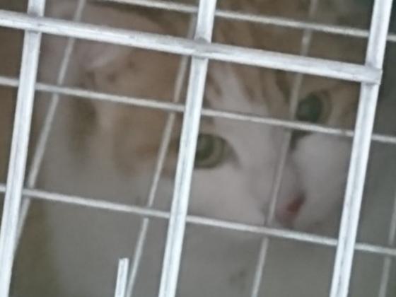 飼い主のいない猫30頭の不妊手術を実行します