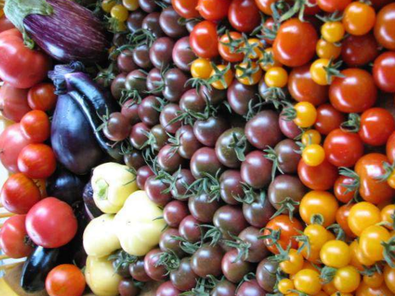耕作放棄地を活用し無農薬野菜を栽培する農業ハウスを建てたい!