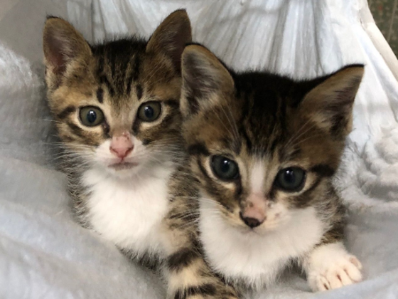 TNR活動を応援!厳しい環境で生きるのら猫を増やさないために。