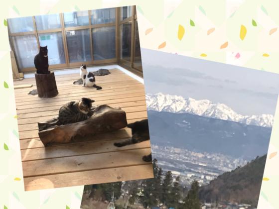 保護猫カフェをバリアフリーに!介護施設入所者さんに猫と絶景を