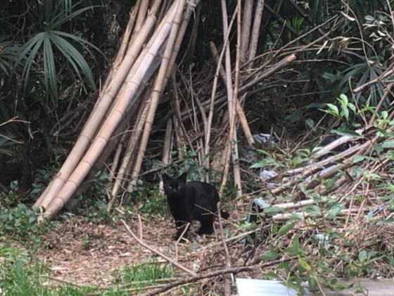 今秋にも住処がなくなる宮前平の猫たちの家族を見つけたい。