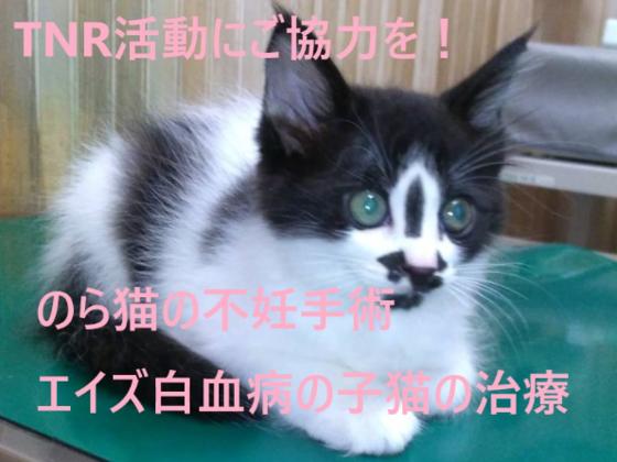 のら猫の保護活動(不妊手術)&白血病・エイズの親子猫の治療