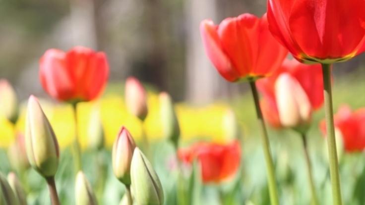復興からまちづくりへ!仙台の公園を美しい花でいっぱいに