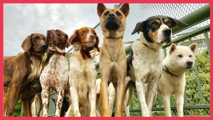 家族に迎え入れてもらうきっかけに。保護犬のカレンダーを製作!
