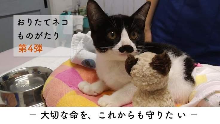 今年も厳しい冬がやってくる。ネコ達の清潔で温かな生活のために