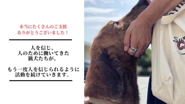 山に捨てられる猟犬たち。一頭でも多くの命を救いたい!
