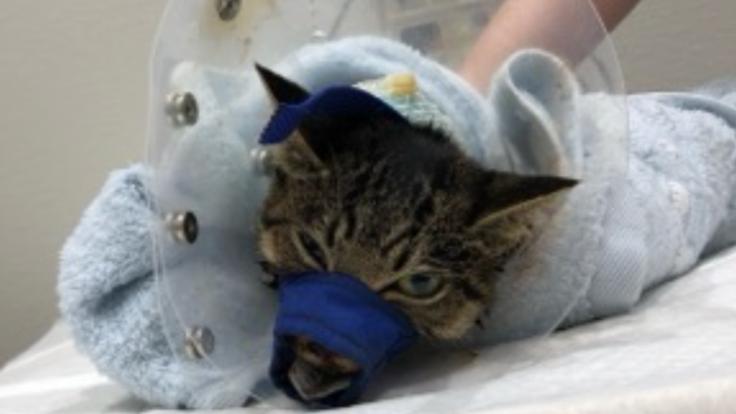 子猫の顎が重傷。元気になると信じて!