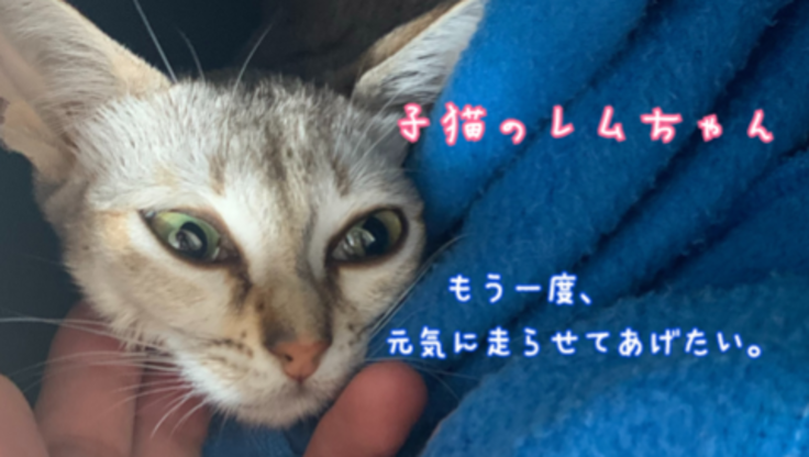 死を待つしかないと言われた子猫。新薬を使って救いたい!