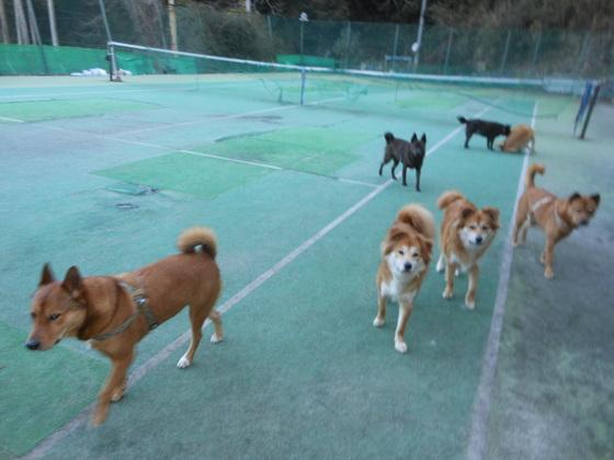 保護した犬や猫たちが思いっきり走れるドックランを作りたい。