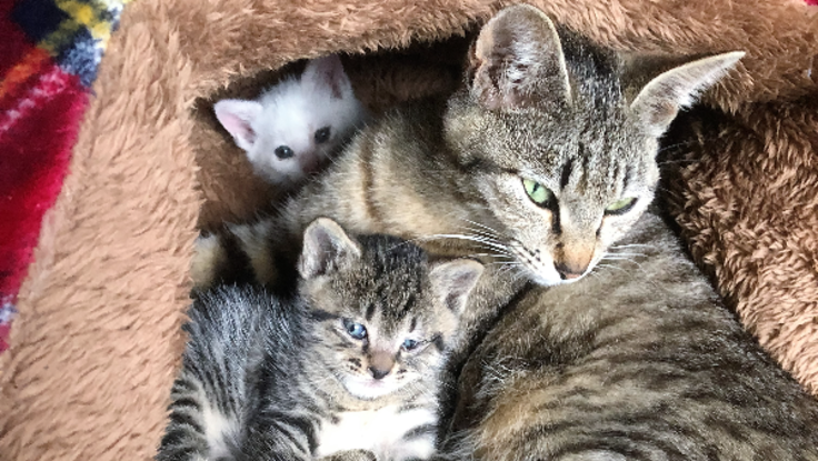 猫嫌いが仕掛けた罠にかかり片足をなくした母猫と子猫を助けたい