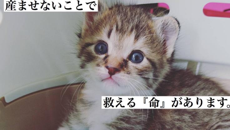 ノラ猫に不妊手術する活動を応援してください