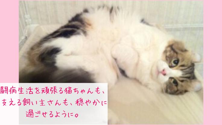 愛猫への想いを形に。乳腺腫瘍や怪我で苦しむ猫ちゃんに介護服を