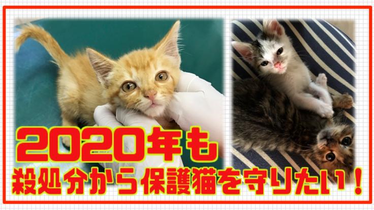 2020年も殺処分から保護猫を守りたい!
