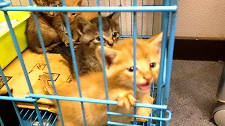 捨てられた猫達を守りたい。保護猫カフェが閉鎖の危機!