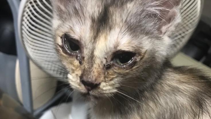 母親に飼育放棄された4匹の仔猫を救いたい!