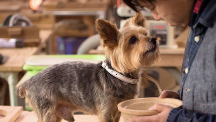 犬との幸せな暮らしをデザインする。犬専門木工房、再建へ。