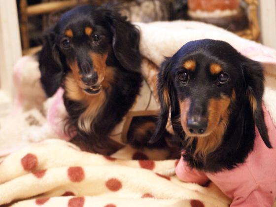 保健所から来た下顎の折れた捨て犬の治療をしてあげたい!