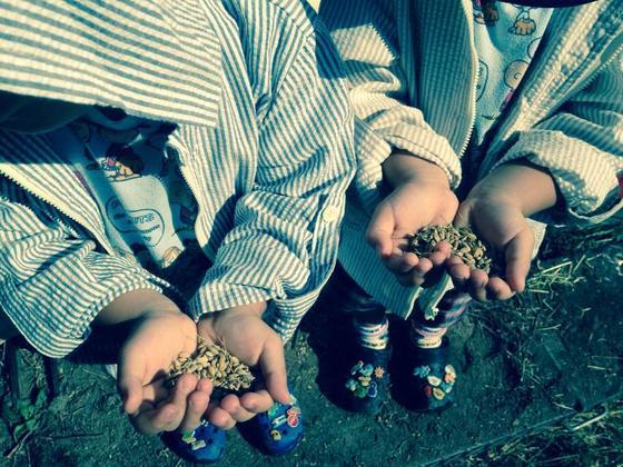 鹿児島の棚田風景と無農薬米を未来に!開田記念碑を再生したい!