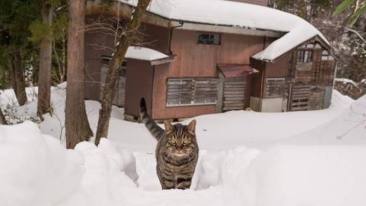 里山に人を呼ぶ!猫が見つけた古民家をリノベーション