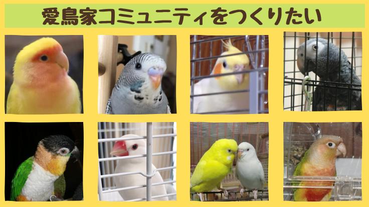 愛鳥家コミュニティのためにフリーペーパーを発行したい!