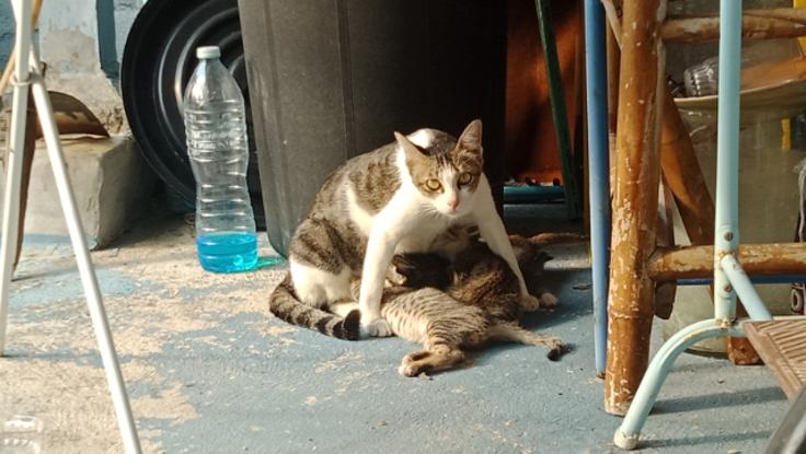 野良猫ファミリーを救いたい