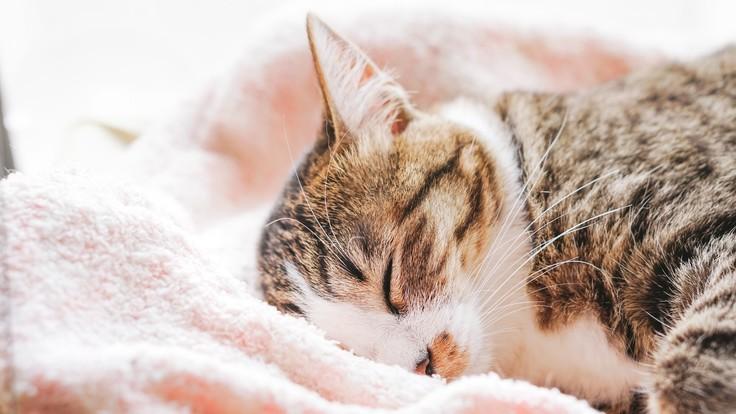 動物に優しい環境を。愛媛県初の完全セパレート型動物病院を開院