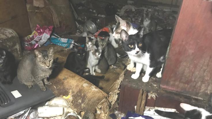 61匹のSOS。多頭飼育崩壊で保護した猫たちを救いたい。