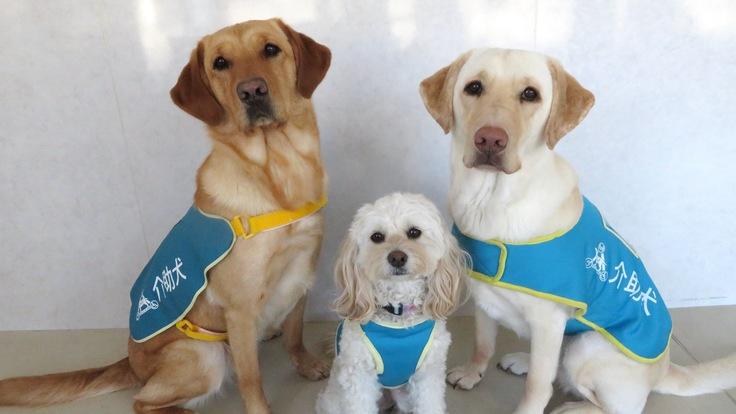 介助犬・聴導犬と暮らせる人を増やす。必要な車両を買い替えたい