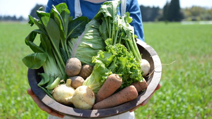 安心安全な自然栽培の食材を、大切な人へ贈ってW応援しよう!