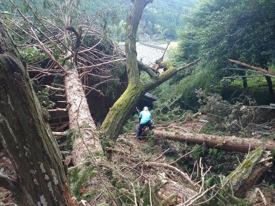災害時も動ける森林里山保全ボランティアを三重県熊野市で育成!