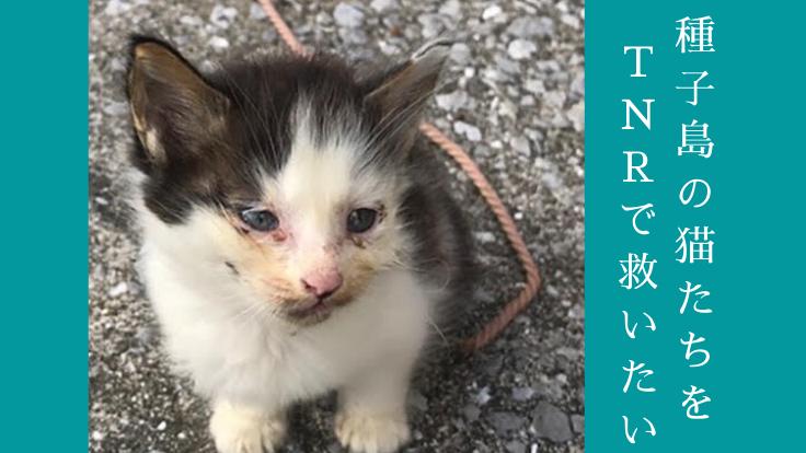 野良猫であふれる種子島。傷ついた猫たちに治療と不妊手術を!