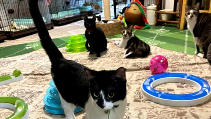 沖縄にいる猫と人をつなげる場所へ!古民家シェルターを作りたい