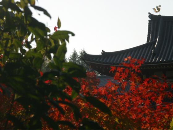 京都府宇治市のゲストハウスで旅人と地域を結び付けたい!