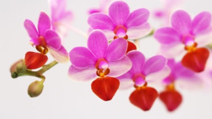 行き場を失った花の命を救いたい!