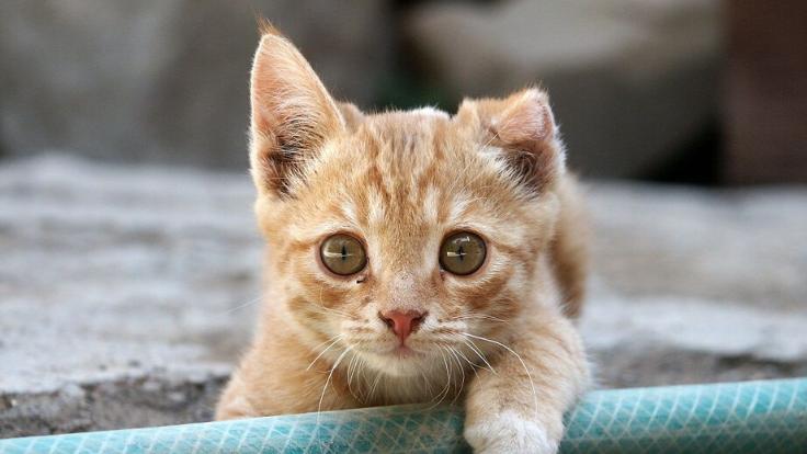 新型コロナウイルスに負けたくない。保護猫たちを守り抜く!