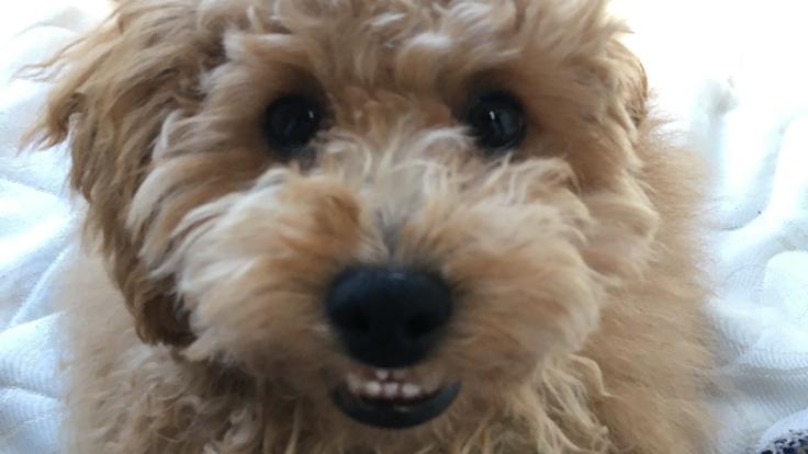 希望の光を保護犬マルにください!!