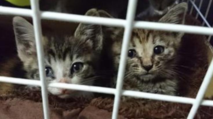 保護猫70匹の命が危険に晒されています!助けて下さい!