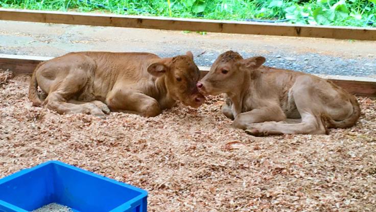 ストレスのない牛の生活環境を作りたい