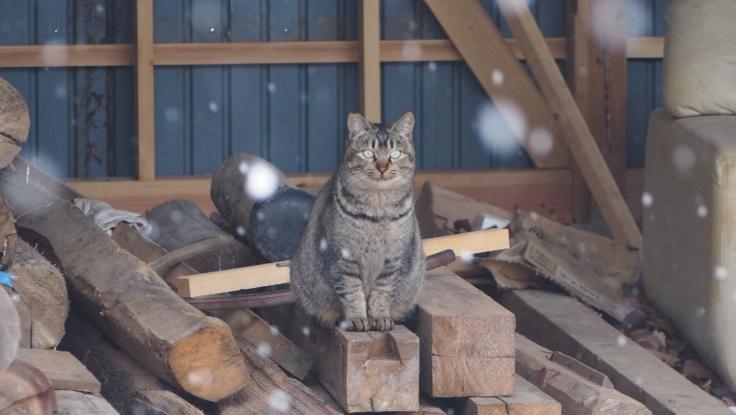 福島原発被災地に未だ残されている猫たちの保護・見守りを!