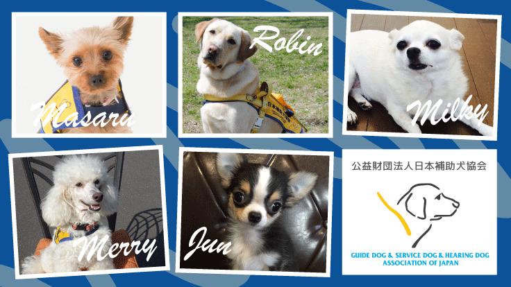 コロナに負けない!!5頭の補助犬を育成するプロジェクト