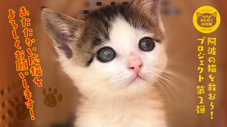 【第2弾】阿波の猫たちを救う。過酷な環境下の猫を減らすために