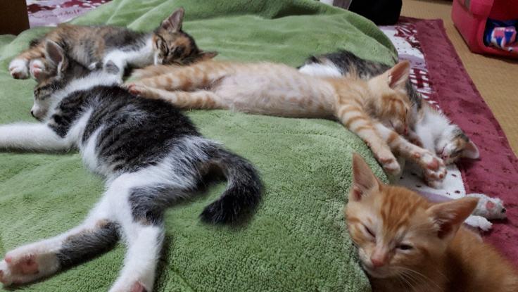 コロナで面会困難。28匹の仔猫の治療・入院費の支援のお願い!