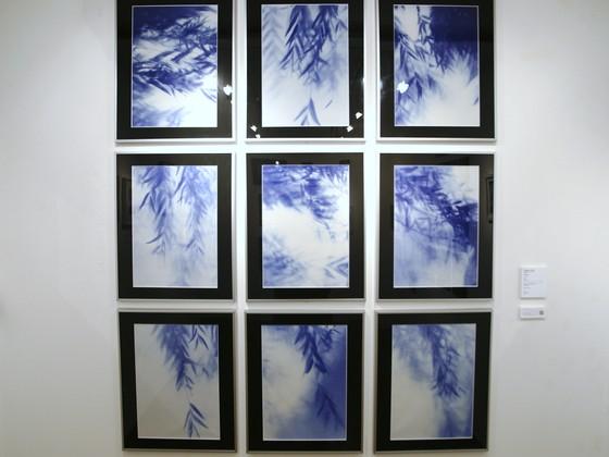 被爆樹木の写真展を広島で開き戦後70年の節目に平和を想う機会を