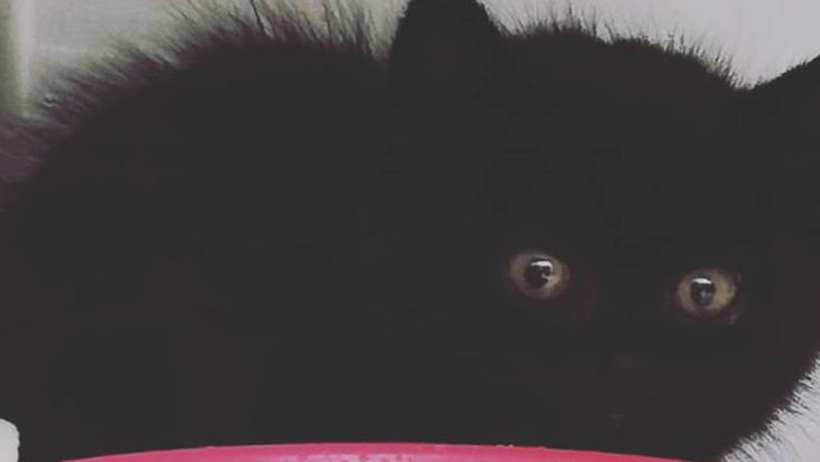 今生きてるのが奇跡の生後一ヶ月の野良の黒猫を助けてください。