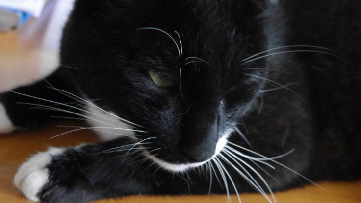 大切な愛猫に白血病と闘う治療を十分に受けさせたい
