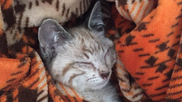 保護猫のコンちゃんを失明の危機から救いたい!