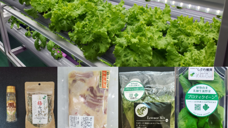 期待を込めた4つの生きた乳酸菌配合商品開発・販売~医食同源~
