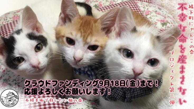 不幸な命を産まさない 不妊手術で救いたい猫の命 【第二弾】