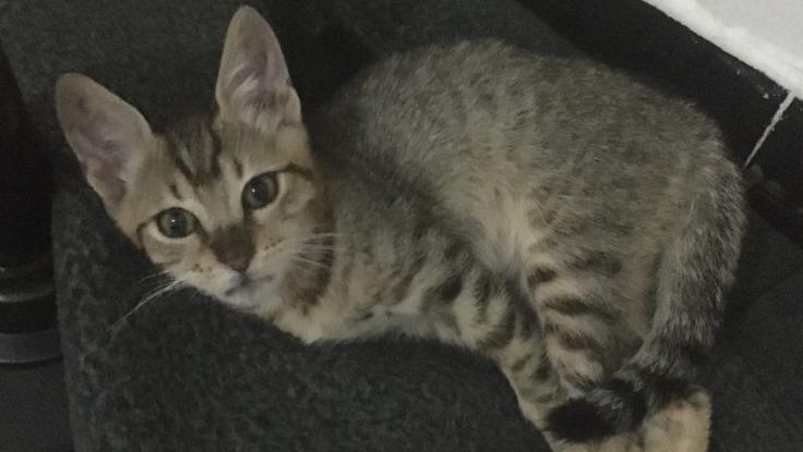 重いドアに挟まれ障害の残ってしまった子猫保護に支援ください!
