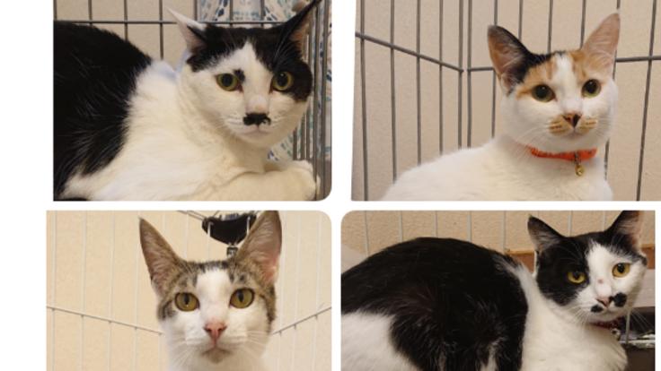 殺処分にしないで。猫たちの里親探しの継続にご支援お願いします